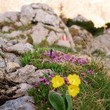 Blumen als Farbtupfer im weißen Kalkgestein